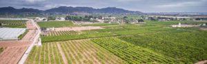 Campos de naranja en Original Valencia marketing