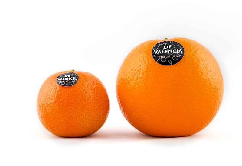 Maranja y mandarina, los mejores cítricos valencianos