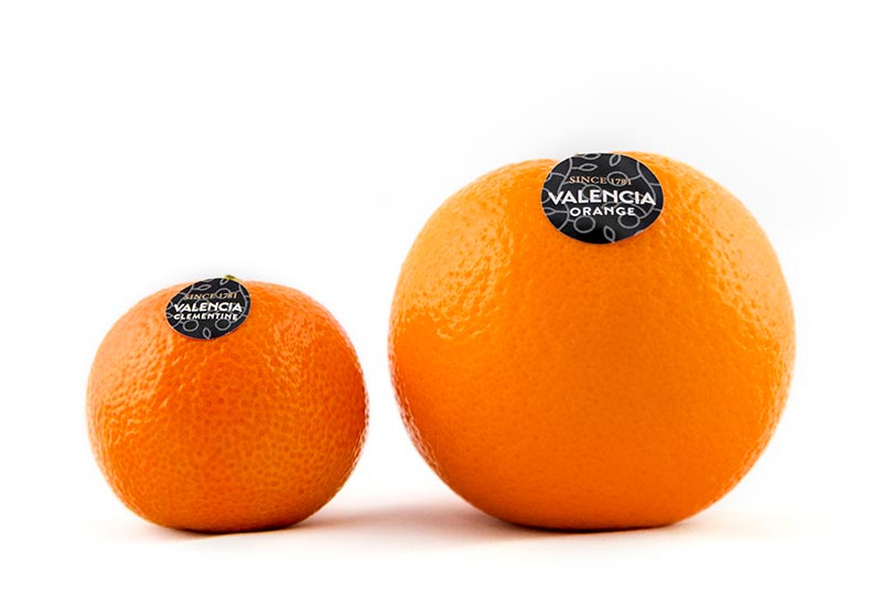Valencia Orange and mandarin citrus fruits