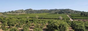 Campos de cultivo de Naranja valenciana
